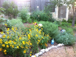 After grass, native plants, June 2012