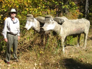 Tanner Wickham's oxen staring at me in 2012, near Palmyra, Tennessee.
