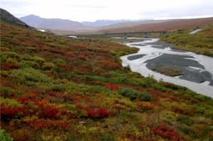 Denali's tundra drenched in fall colors and swollen rivers.